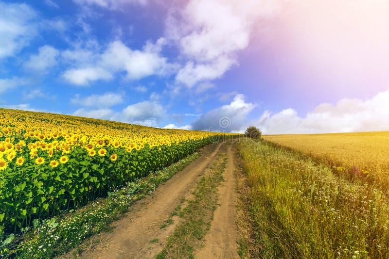 Landskap med grusvägen mellan ängen tidigt på våren Jordbruk sätter in och betar Naturdesign Veteskördfält och fotografering för bildbyråer