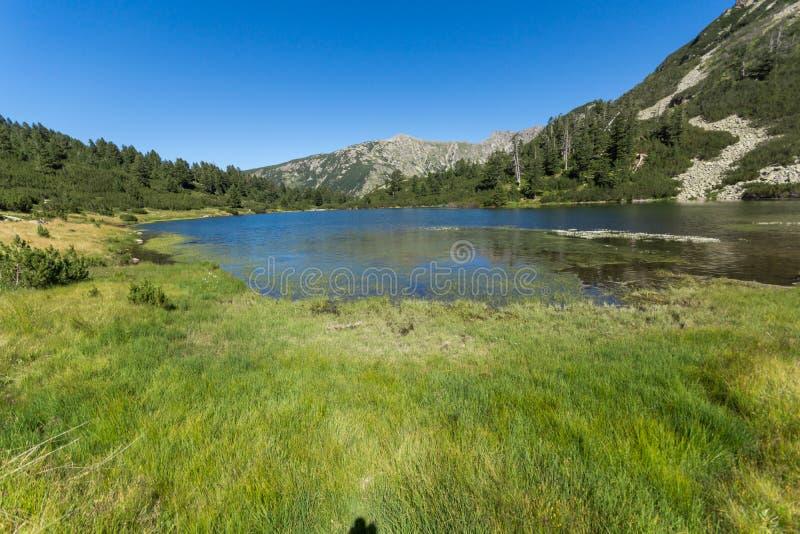 Landskap med klart vatten av fiskVasilashko sjön, Pirin berg, Bulgarien royaltyfri foto