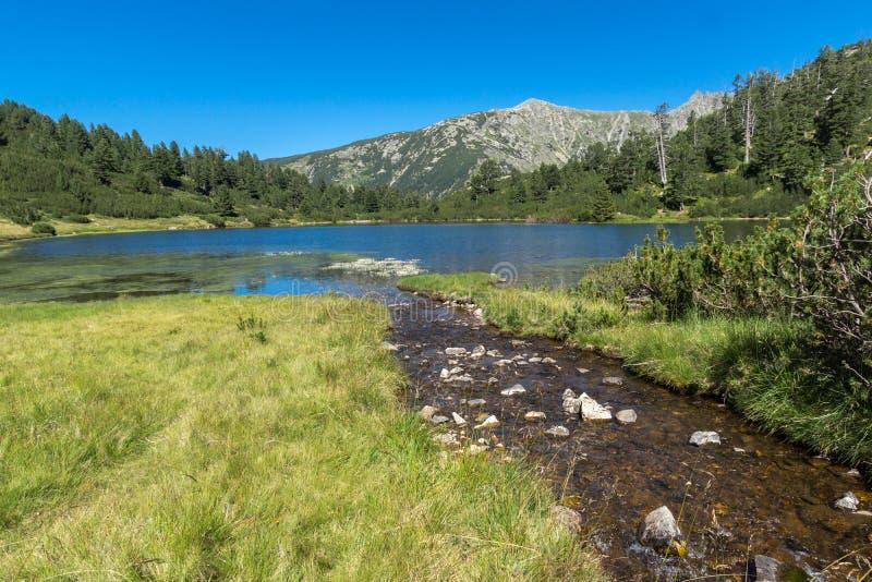 Landskap med klart vatten av fiskVasilashko sjön, Pirin berg, Bulgarien royaltyfria foton