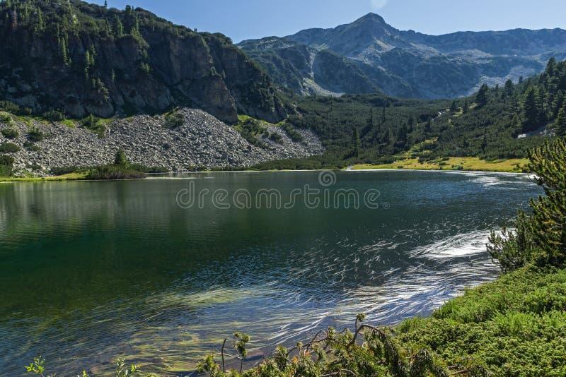 Landskap med klart vatten av fiskVasilashko sjön, Pirin berg, Bulgarien royaltyfria bilder
