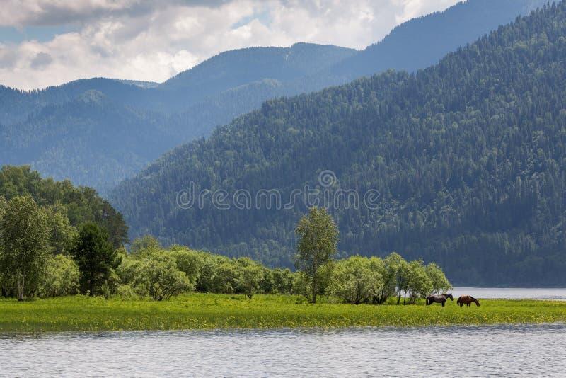 Landskap med kullar och hästar på kusten av sjön arkivbild