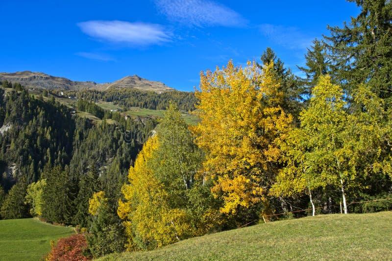 Landskap med lövskogen i höstbladfärger royaltyfri fotografi