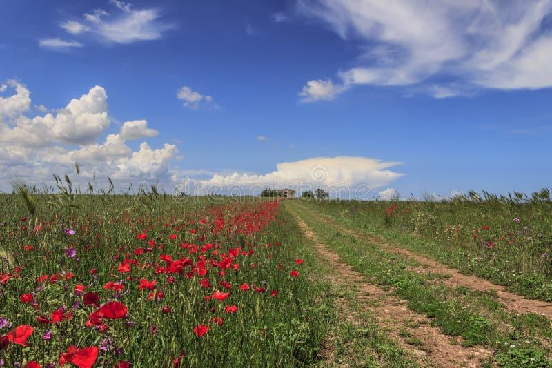 Landskap med lantbrukarhemmet och landsvägen till och med fältslutvallmo Grön och blommig bygd korsade av en bana som går awaen royaltyfria foton