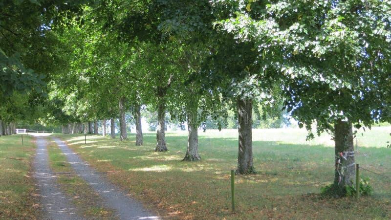 Landskap med lantliga vägar för gaffel i skog arkivfoto