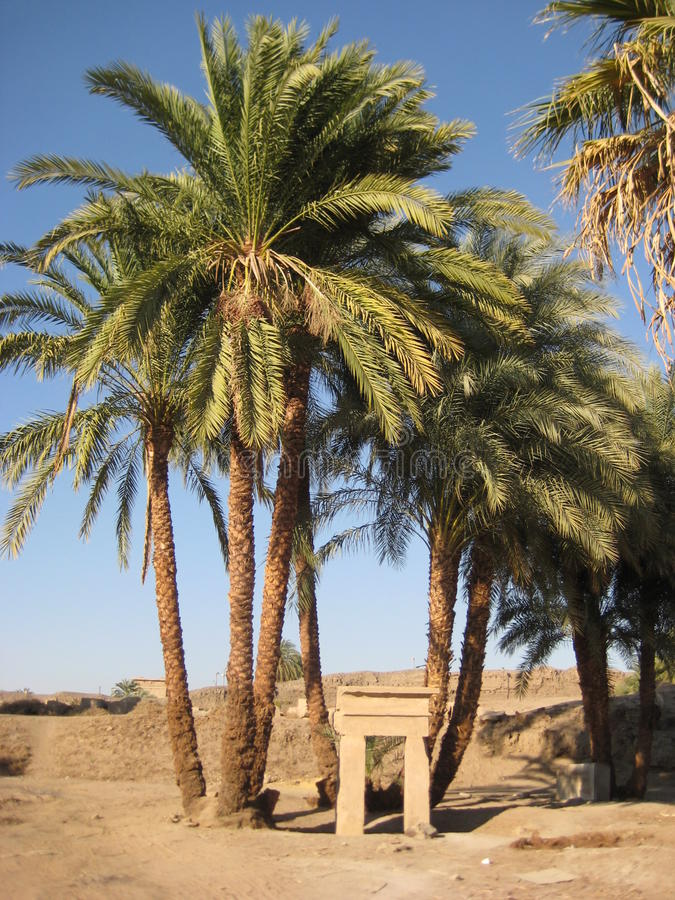 Landskap med palmträdarkitektur av den forntida staden av Luxor i Egypten arkivfoto