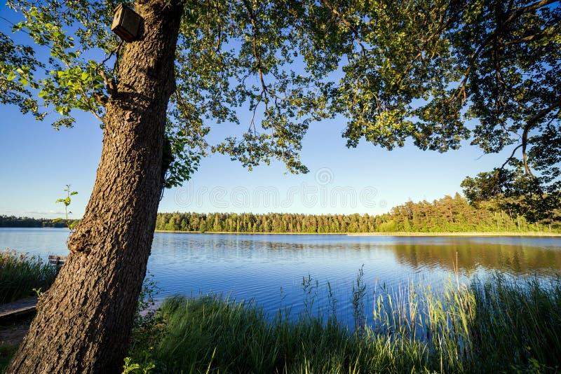 Landskap med sjön i sommar blå sky royaltyfri foto