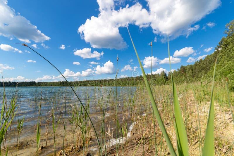 Landskap med sjön i sommar blå sky royaltyfria foton
