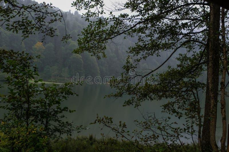 Landskap med sjön och den dimmiga skogen royaltyfria foton