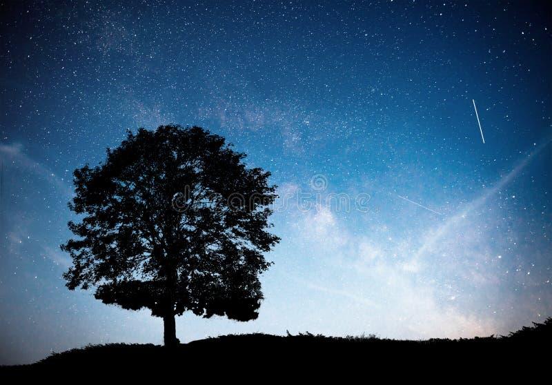 Landskap med stjärnklar himmel för natt och konturn av trädet på kullen Mjölkaktig väg med det ensamma trädet, fallande stjärnor arkivbilder