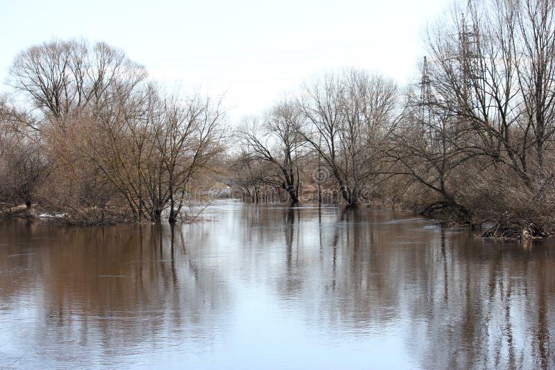Landskap med träd som står i vattnet arkivbilder