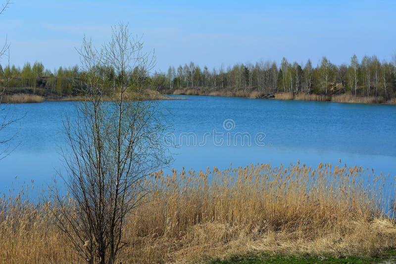 Landskap med trädet på bakgrunden av den pittoreska sjön med klart blått vatten tidig fjäder royaltyfria bilder