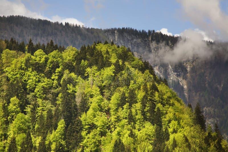 Landskap nära den Krnica byn slovenia arkivfoto