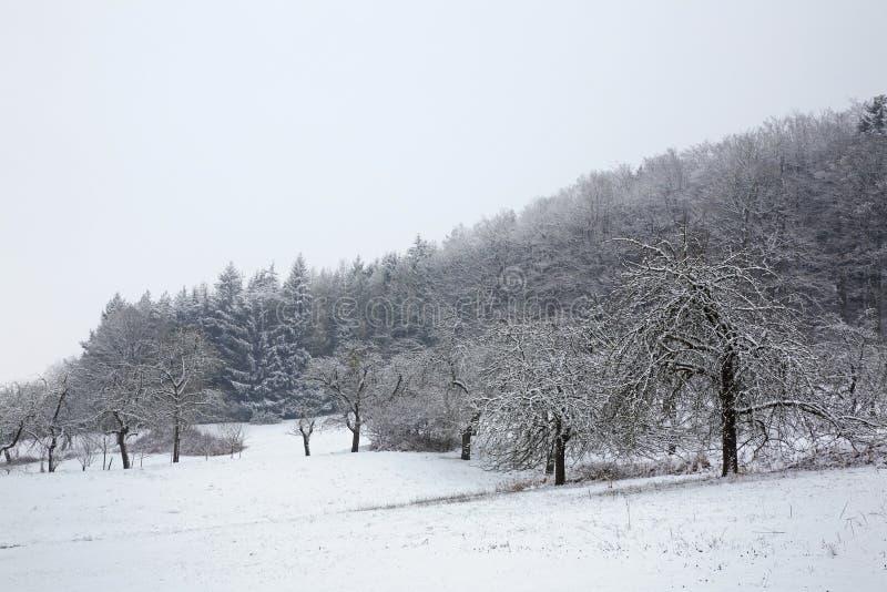 Landskap nära Stuttgart Vinter germany royaltyfria foton