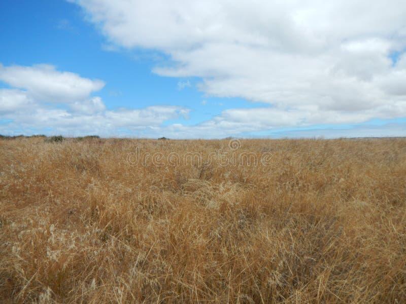 Landskap nära Victor Harbor, Australien royaltyfria foton