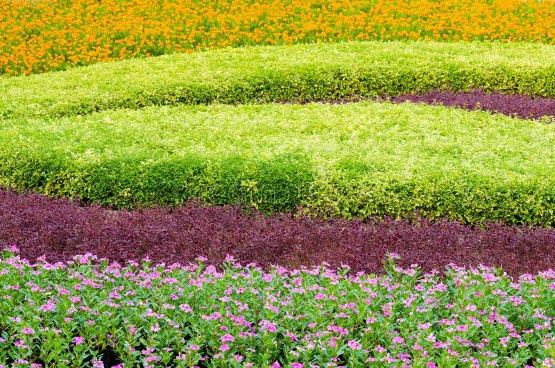 Landskap och blomma för härligt träd för dekorativa växter tropiskt arkivfoto