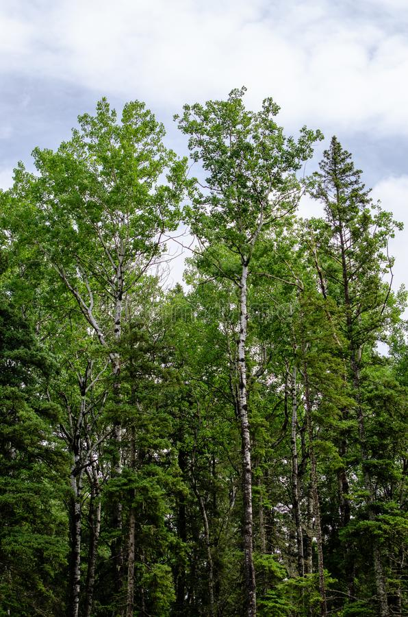 Landskap på Duck Mountain Provincial Park royaltyfria foton