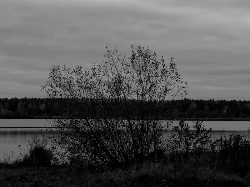 Download Landskap På En Sjö I Den Svartvita Bilden Fotografering för Bildbyråer - Bild av sikt, reflexion: 78730701