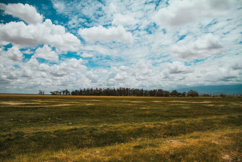 Landskap på safari för Amboseli nationalparkAfrika Kenya savann fotografering för bildbyråer