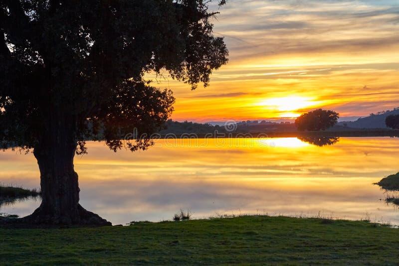 Landskap på solnedgången med en ek, en sjö och berg arkivfoto