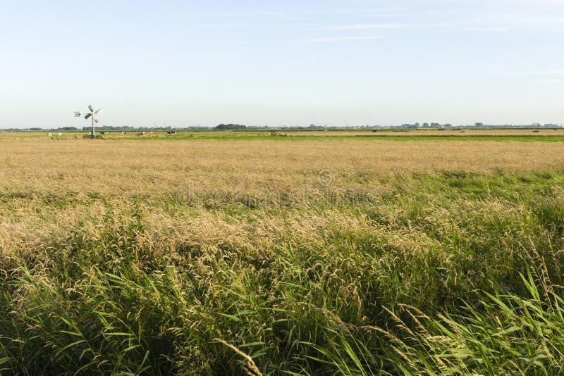 Landskap på Wormer- en Wisperveld royaltyfria bilder