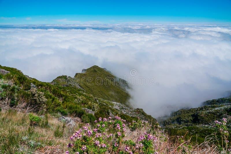 Landskap p? Pico de Ruivo i madeira arkivbild