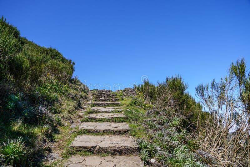 Landskap p? Pico de Ruivo i madeira arkivfoton