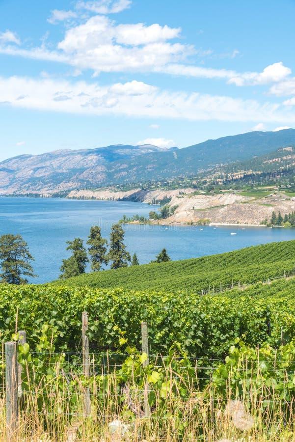 Landskap sikten av vingårdar, sjön, berg och blå himmel i sommar royaltyfri bild
