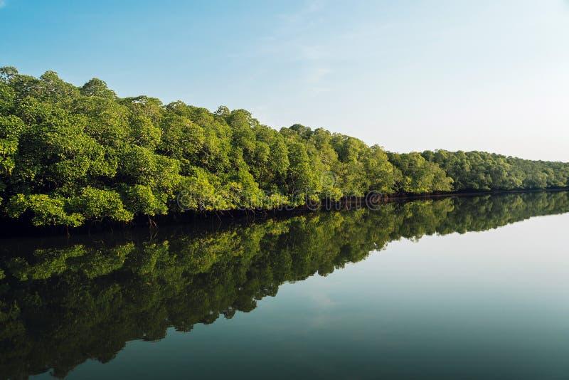 Landskap sikten, den stora mangroveskogen i Thailand a royaltyfri fotografi