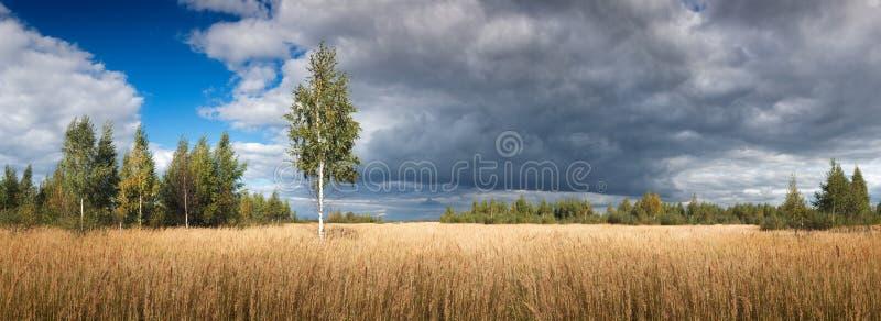 Landskap sikten med det breda ljusa gula lösa fältet med högt gräs med en dramatisk blå himmel för enkel trädskog med vitt mörker arkivfoton