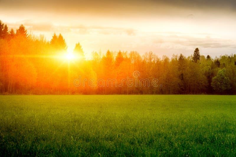Landskap solig gryning i ett fält Fält av gräs och den färgrika solnedgången royaltyfria foton