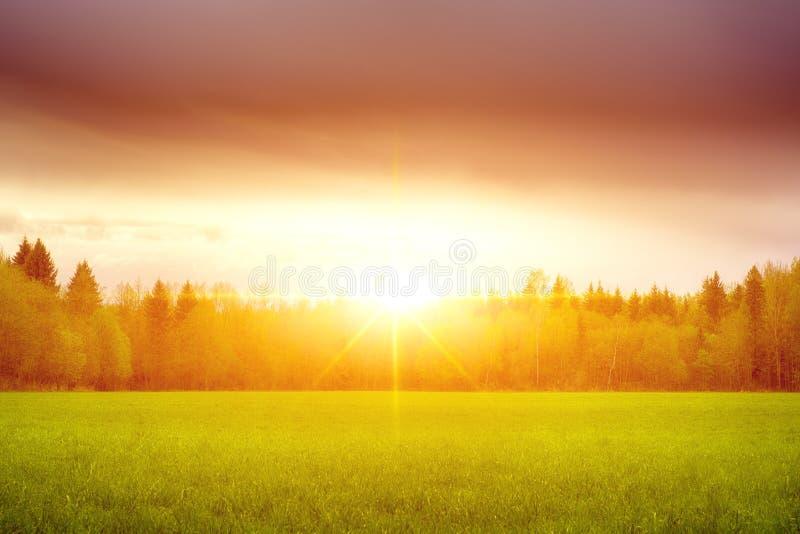 Landskap solig gryning i ett fält Fält av gräs och den färgrika solnedgången arkivbilder