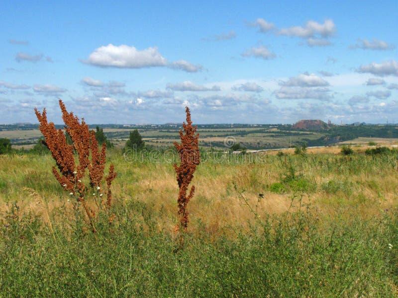 Landskap Stäppzon arkivfoto