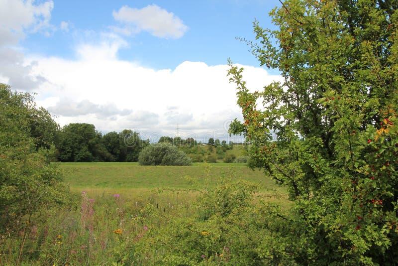 Landskap vid floden Rother Treeton royaltyfri foto