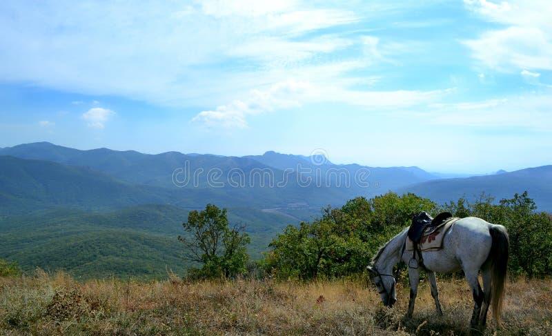 Landskap vit häst, på gräset, mot den blåa himlen och bergen royaltyfri foto