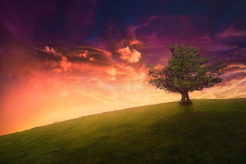 Landskapbakgrund av det ensamma trädet på kullen arkivfoto