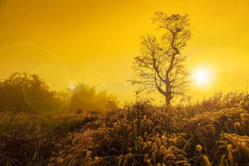 Landskapbild med trädkonturn på solnedgången royaltyfri fotografi