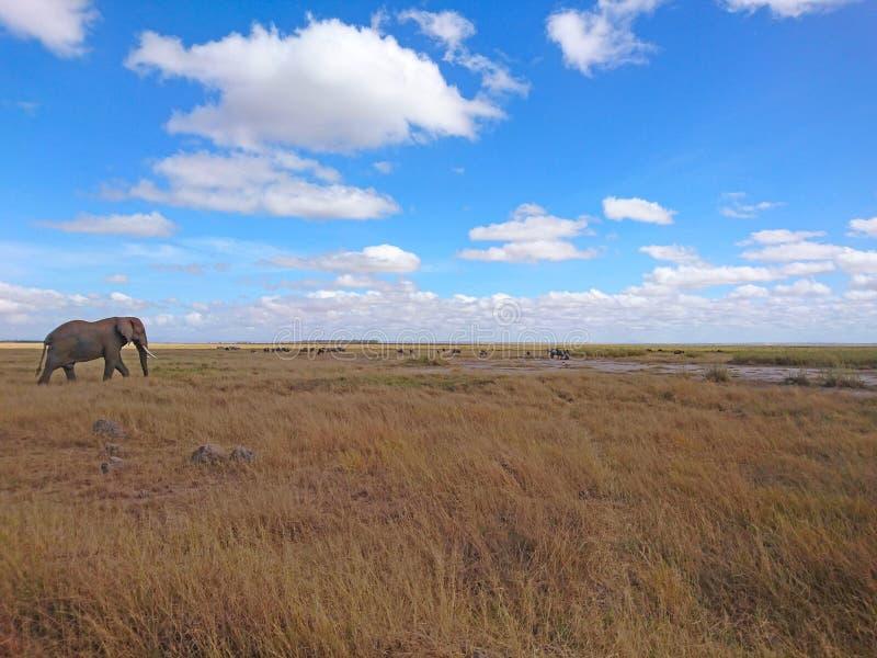 Landskapbildbakgrund med elefanten arkivbild