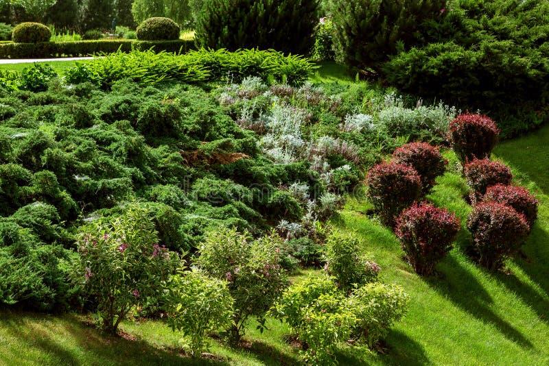 Landskapdesignen av trädgården planteras med olika variationer av bushs royaltyfria bilder