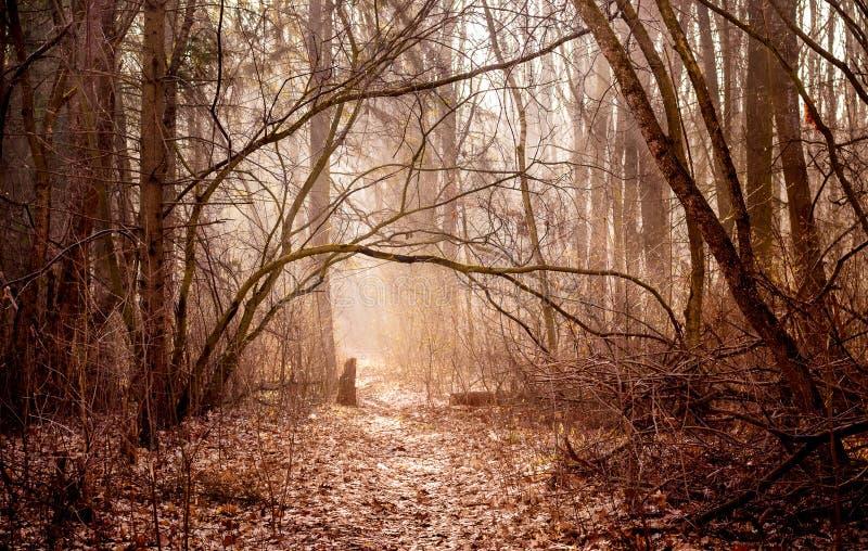 Landskapet är i varma färger med höstträn i morgonen, tränger igenom exponerar solen till och med dimman och vägen in arkivfoton