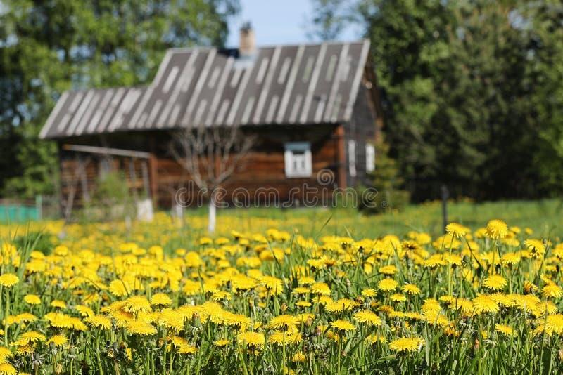 Landskapet är sommar Gröna träd och gräs i en bygd landar arkivfoto