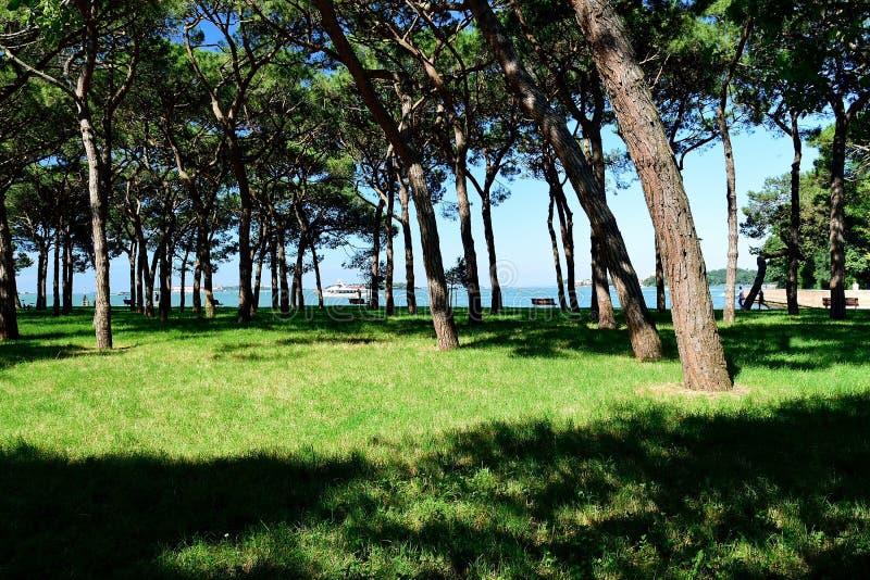 Landskapet av ön Saint Helena arkivbilder