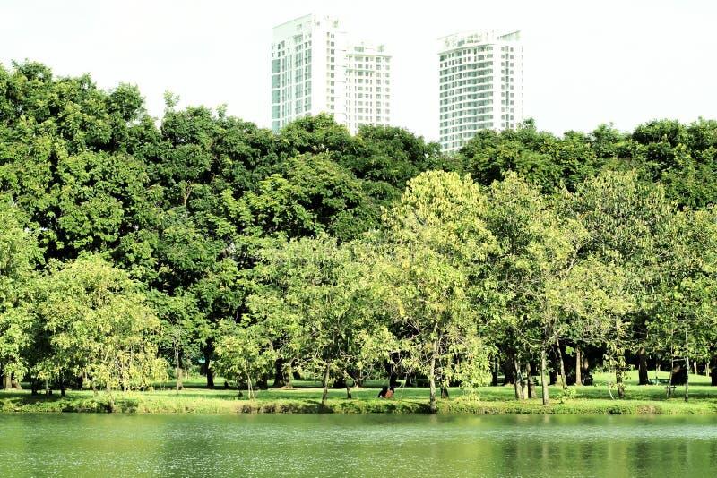 Landskapet av allmänhet parkerar har det härliga stora gröna trädfältet av gräs och sjön med för löneförhöjningbyggnad för staden royaltyfri fotografi