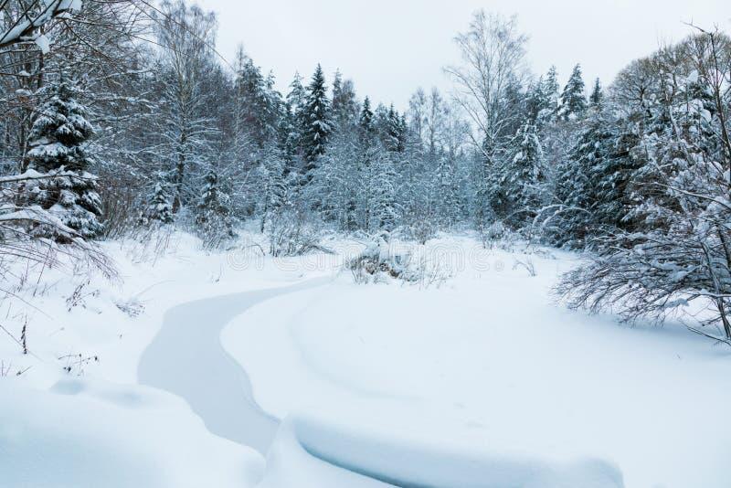 Landskapet av bäcken i den härliga vinterskogen eller i parkerar bland träden under snön, is royaltyfria bilder
