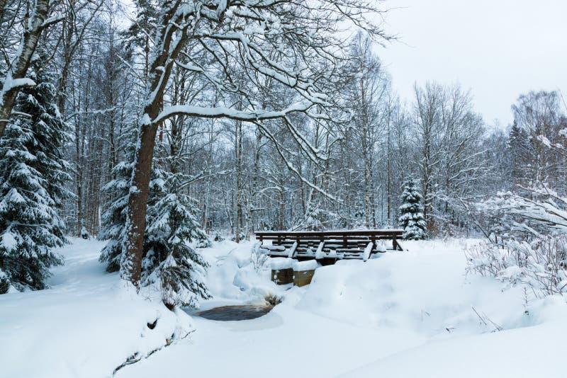 Landskapet av bäcken och spången i den härliga vinterskogen eller i parkerar bland träden under snön, is royaltyfri bild