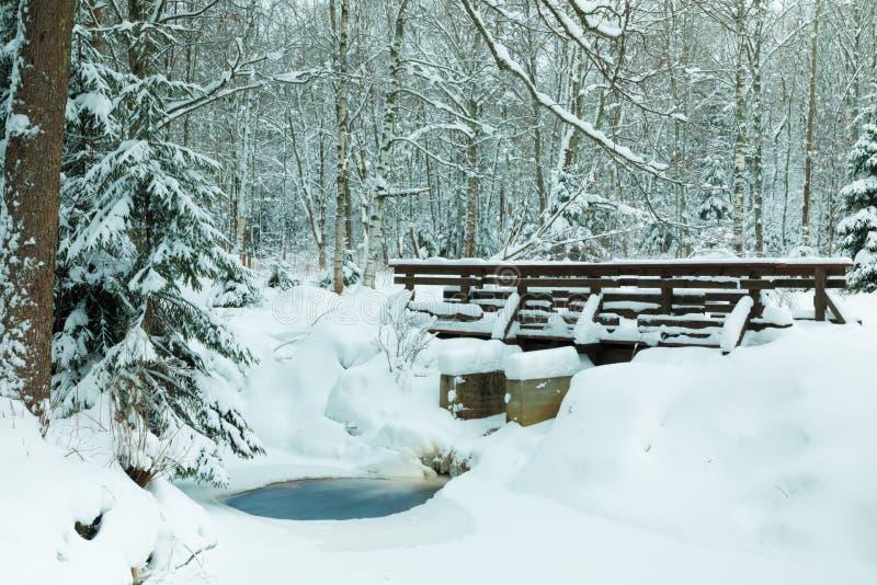 Landskapet av bäcken och spången i den härliga vinterskogen eller i parkerar bland träden under snön, is arkivfoton