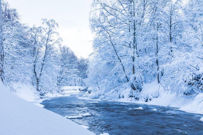 Landskapet av den lilla floden eller bäcken i den härliga vinterskogen eller i parkerar royaltyfria foton