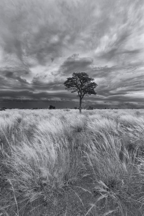 Landskapet av ett ensamt träd på en grässlätt med stormmoln approximerar royaltyfria foton