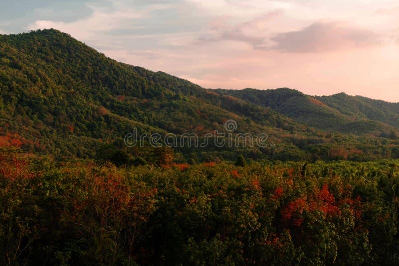 Landskapet av skogen till bergen och det mjuka ljusa solskenet till bergen i eftermiddagen, t, Koh yao yai, Thailand royaltyfri bild