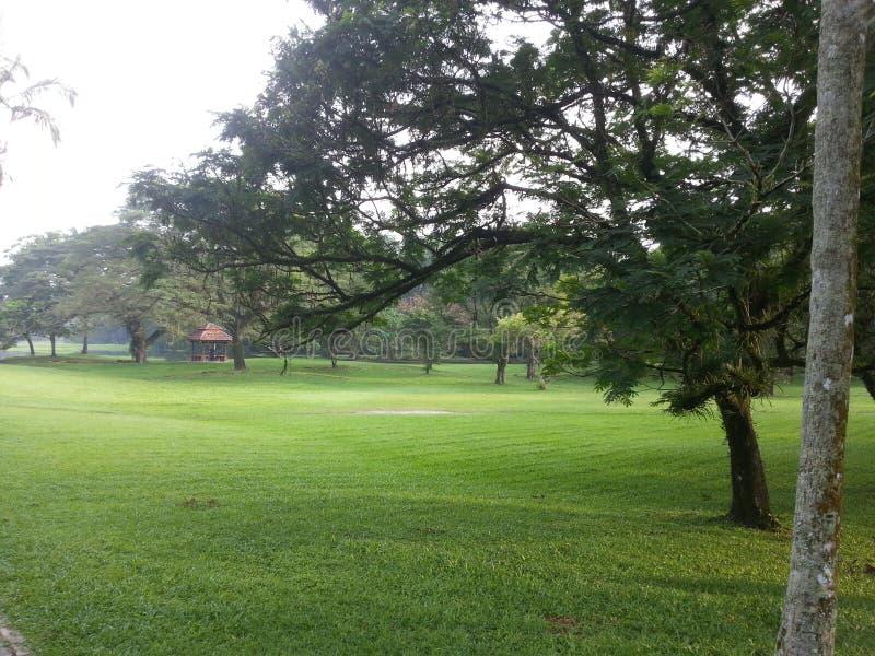 Landskapet av träna i parkerar royaltyfri bild