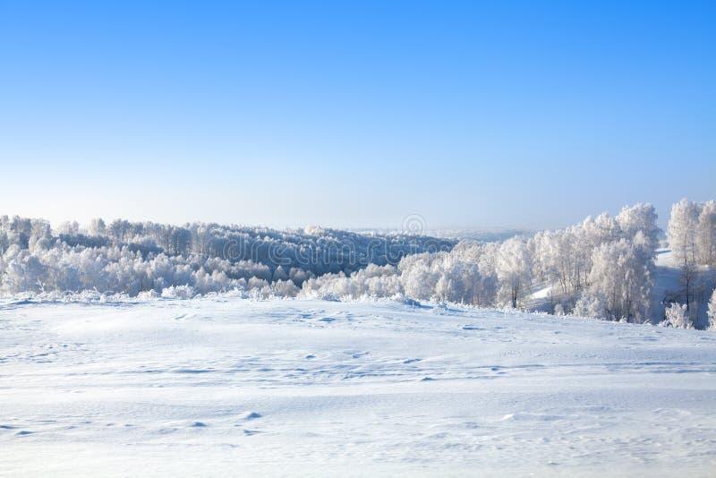 Landskapet för det vintersnöskogen och fältet, vita träd täckte med hoarfrost, kullar, snödrivor på ljus bakgrund för blå himmel royaltyfri fotografi
